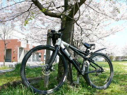ゴリライナーと桜.jpg
