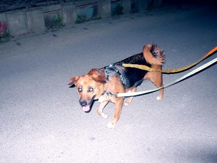 夜散歩3.JPG