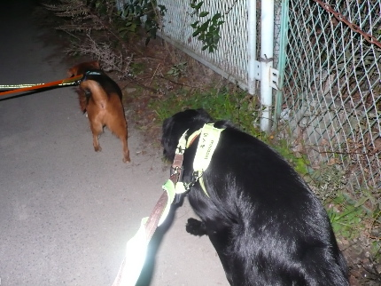 夜散歩4.JPG