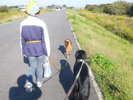 秋犬.jpg