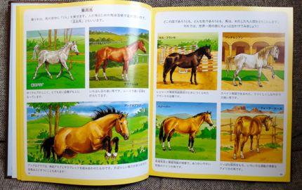 馬の種類.jpg