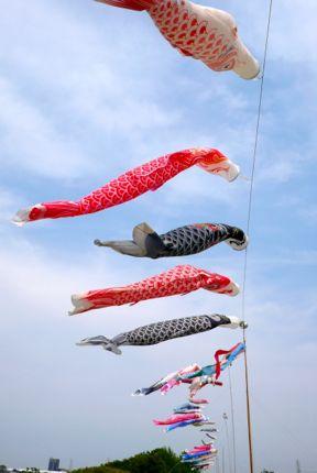鯉のぼり.jpg
